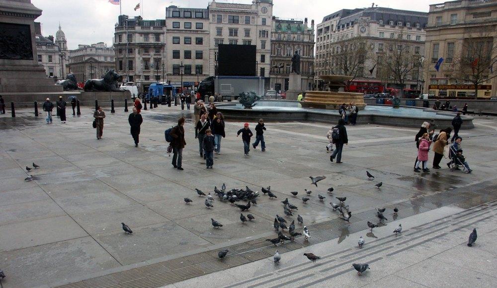 Кормление голубей с 2007 года запретили